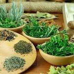 Какие травы используются для очищения организма