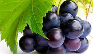 Калорийность и полезные свойства винограда