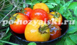Малосольные помидоры с горчицей и аспирином