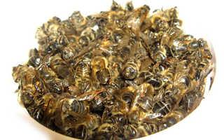 Пчелиный подмор для похудения: невероятно эффективное средство