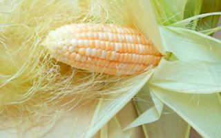 Как использовать кукурузные рыльца для похудения