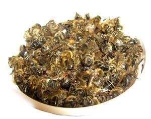 пчелинный подмор для похудения