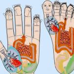 Су-джок терапия для похудения